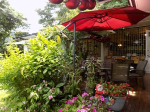 This photo shows the terrace at Yerette with lots of plants, some Christmas decorations and a scarlet parasol