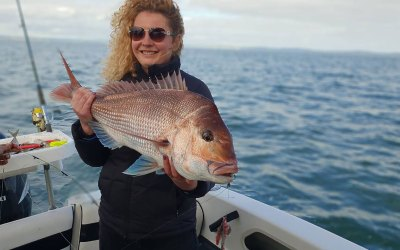 Episode 9 tonight on C31 – all about Snapper