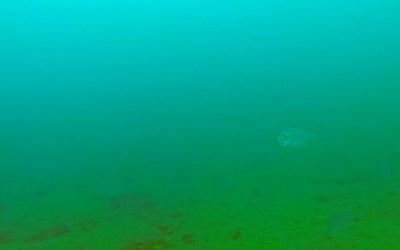 2018 Dec 16 – Underwater Portarlington