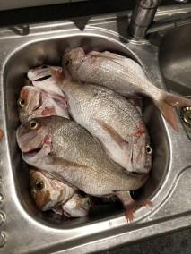 2018-Dec-16th happy fisherman Portarlington
