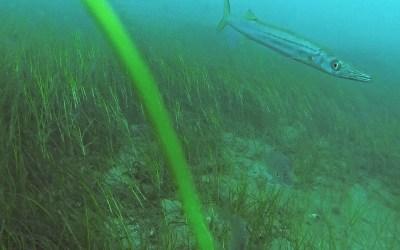 Mud Island North Side underwater footage