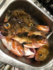 2019-sep-18-happy-fisherman-fishing-port-phillip-bay-mud-island08