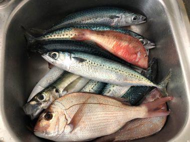 happy-fisherman-fishing-cape-shank