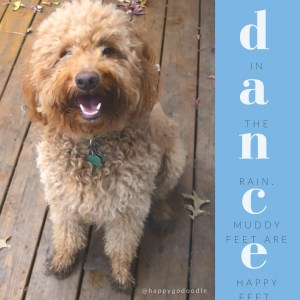 Red goldendoodle dog with smiling face and muddy paws on deck and happy quote about dancing, blue sidebar