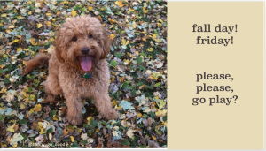 Red goldendoodle dog with tongue out and sitting in green and yellow fall leaves with rhymed quote by Chloe, Happy-Go-Doodle