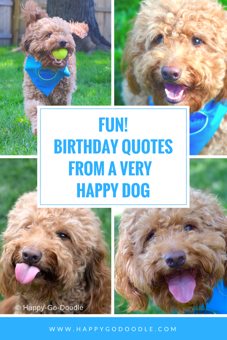 Collage of dog photos with title Fun! Birthday Quotes from a very happy dog