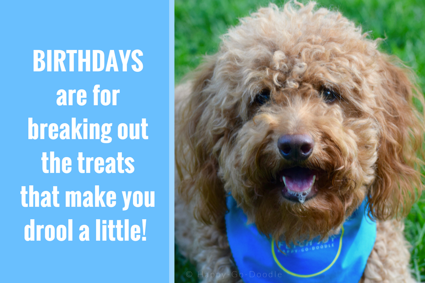 Red goldendoodle dog wearing blue dog bandana and birthday quote