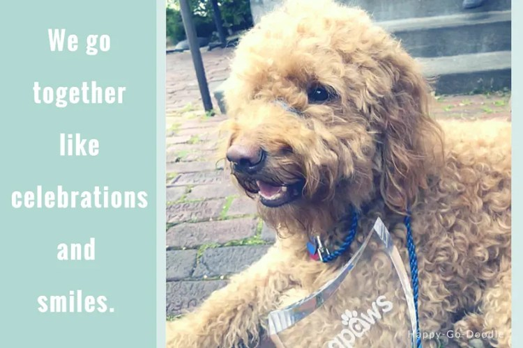 Happy-Go-Doodle Chloe, a red goldendoodle dog, with BlogPaws trophy on brick patio and words We go together like celebrations and smiles.