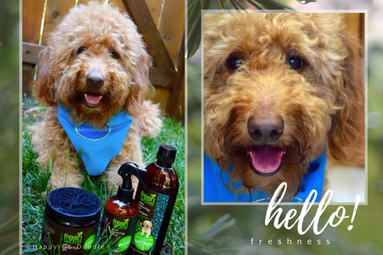 Happy-Go-Doodle Chloe, a red goldendoodle dog, sits on green grass with Fresh Wave odor removing products and title says hello freshness and inset photo of dog's smiling face