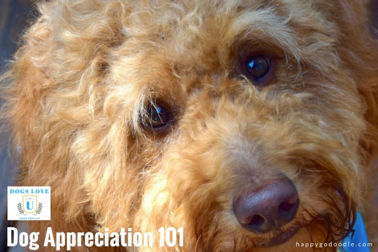 EmBARK on this happy course in Dog Appreciation with us! Because Dogs Love U since forever!