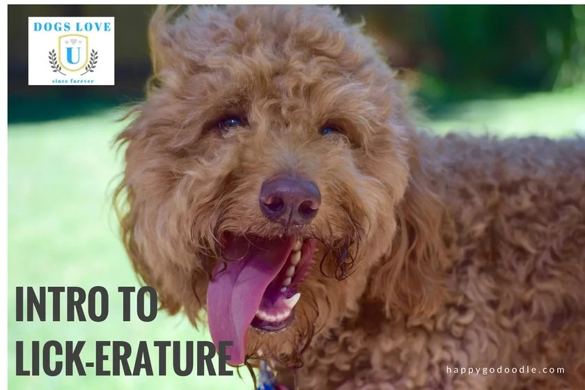 Red goldendoodle dog with tongue hanging out of mouth and title Intro to Lick-erature