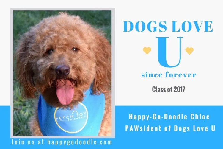 Happy-Go-Doodle Chloe, a red goldendoodle dog, with Title Dogs Love U since furever class of 2017 and title Pawsident of Dogs Love U