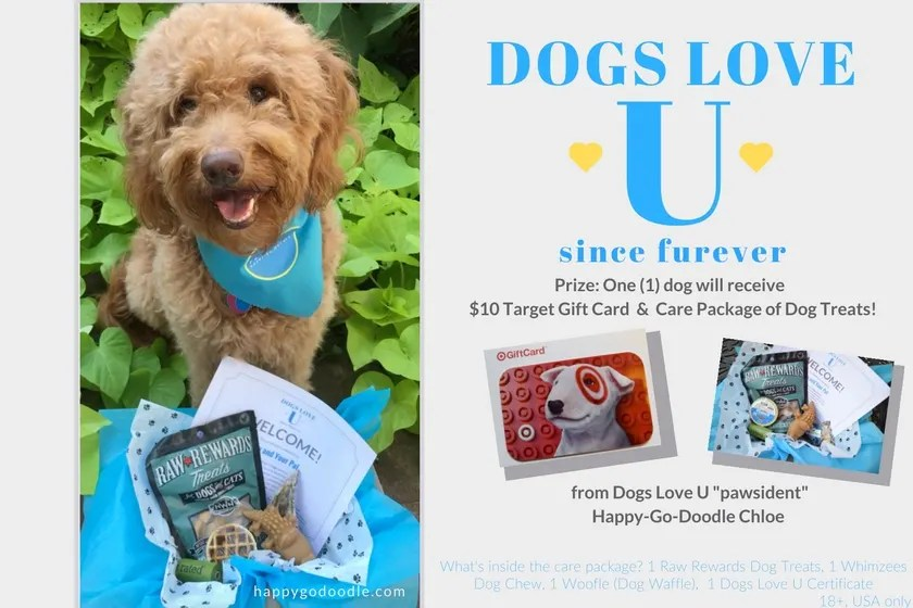 Red goldendoodle dog with Dogs Love U prizes including a care package of dog treats and a Target Gift card