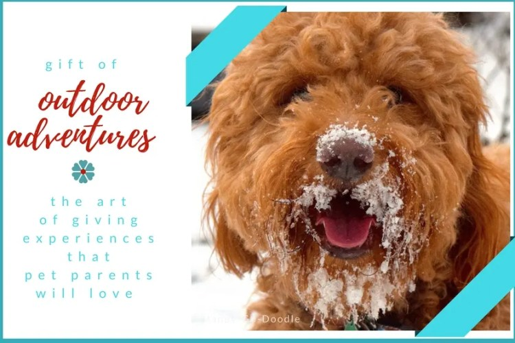 Red goldendoodle dog and title the gift of outdoor adventures the art of giving experiences that are gift ideas that dog owners will love