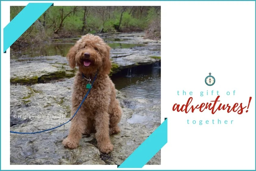 Gift Ideas For Dog Owners Dogs Who Love The Outdoors Happy Go Doodle