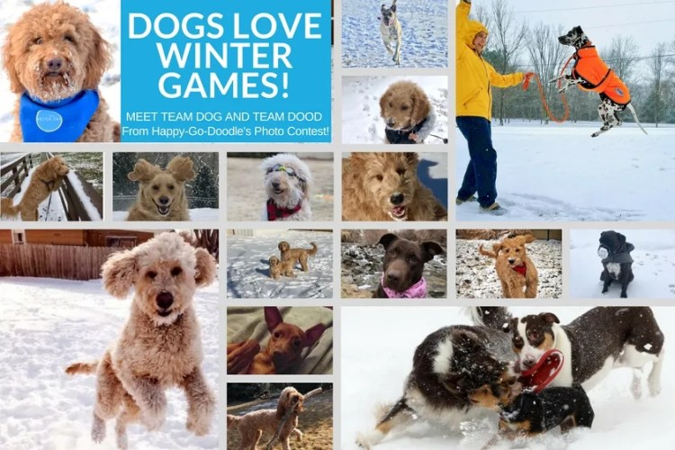 Dogs from Happy-Go-Doodle's Dogs Love Winter Games Photo Contest all doing fun winter activities