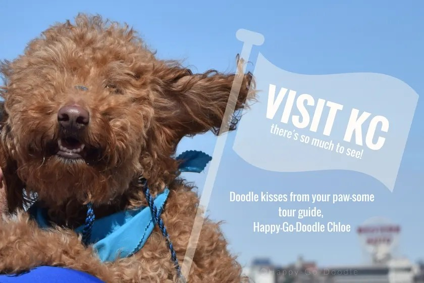 red goldendoodle dog with furry ears blowing in wind and flag that says visit kc there's so much to see