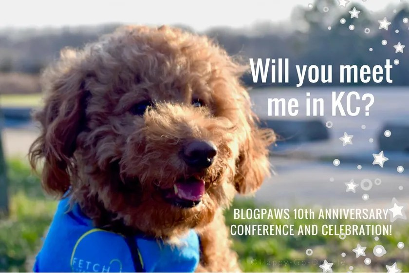 BlogPaws Conference 2018 Red goldendoodle with Will you meet me in KC title