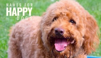 101 Old Fashioned Dog Names For Girl Puppy Cuteness - Happy-Go-Doodle®