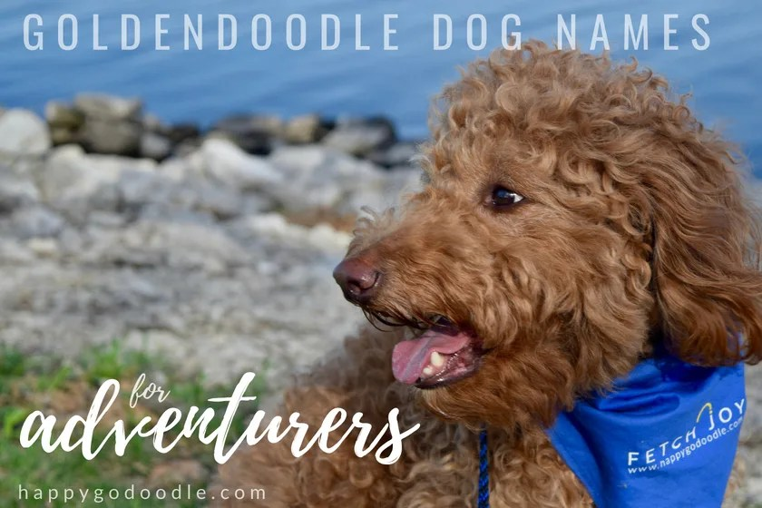 Red goldendoodle dog and lake and title goldendoodle dog names for adventurers