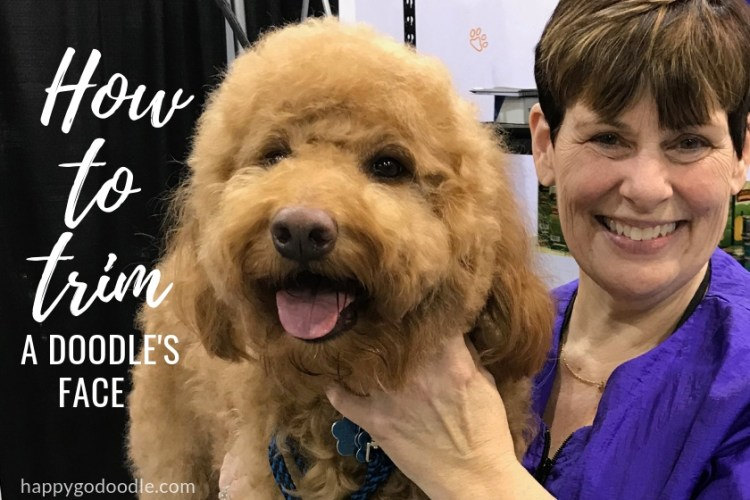 how to trim a goldendoodle's face title and red goldendoodle dog next to groomer