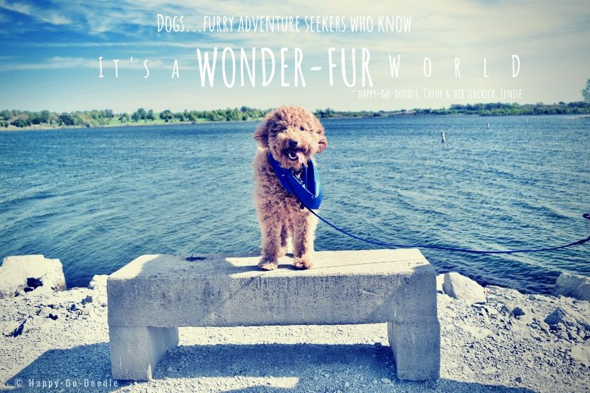 dog standing in front of blue lake and blue sky with quote for dog lovers that says dogs...furry adventure seekers who know it's a wonder-fur world written by happy-go-doodle chloe and sidekick jenise