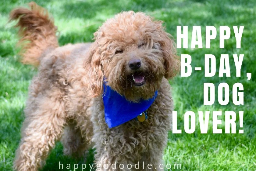 caption Happy Birthday Dog Lover and smiley Goldendoodle dog photo