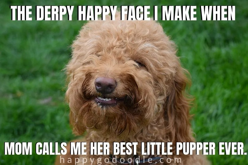 doggolingo meme about best pupper ever and smiling red goldendoodle dog photo