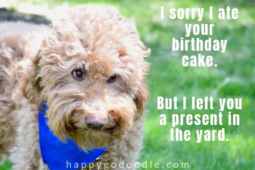 happy birthday meme funny dog face photo