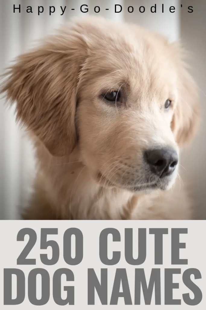 photo cute dog face and title 250 cute dog names ending in Y