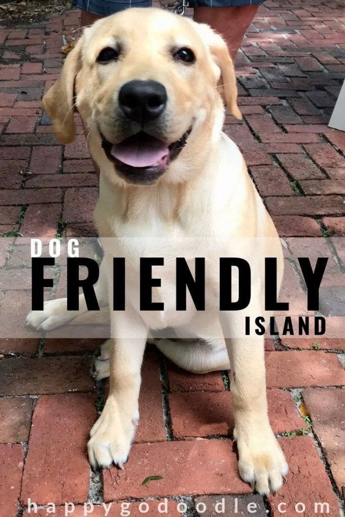 photo labrador retriever and title dog friendly amelia island
