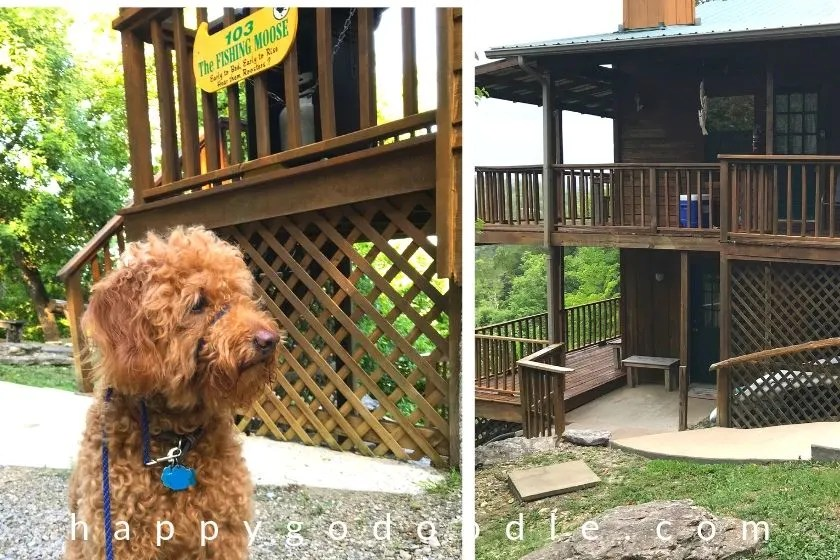 photo red goldendoodle dog sitting outside of cabin in eureka springs arkansas area
