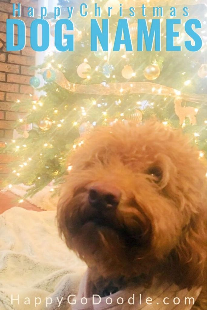 photo dog in front of christmas tree and title merry christmas dog names