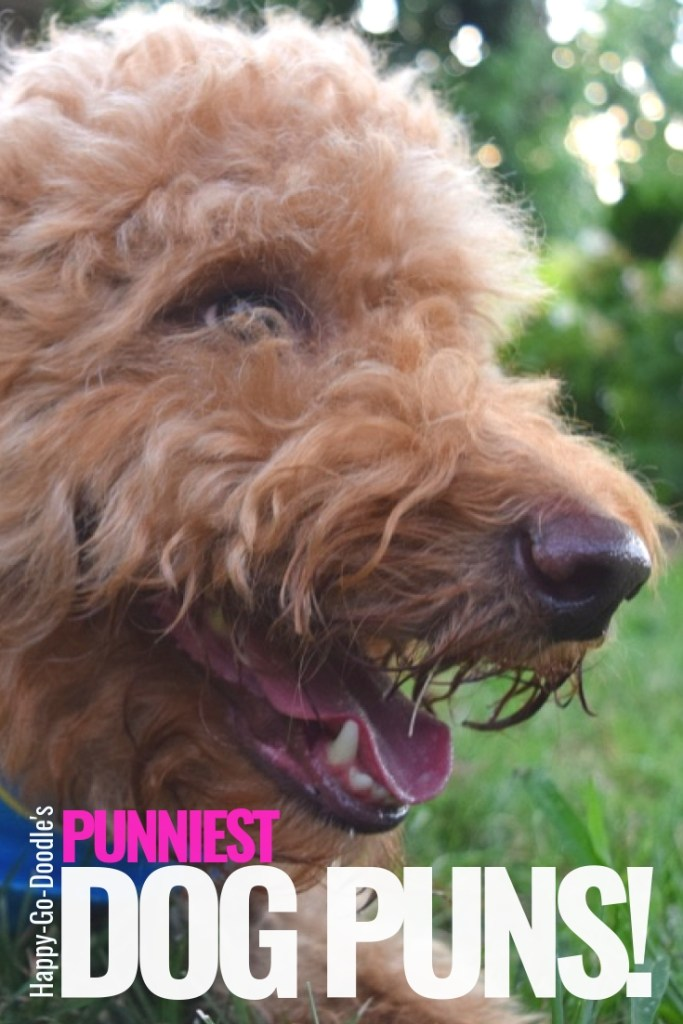 photo dog with a grinning face and title Happy-Go-Doodle's punniest dog puns