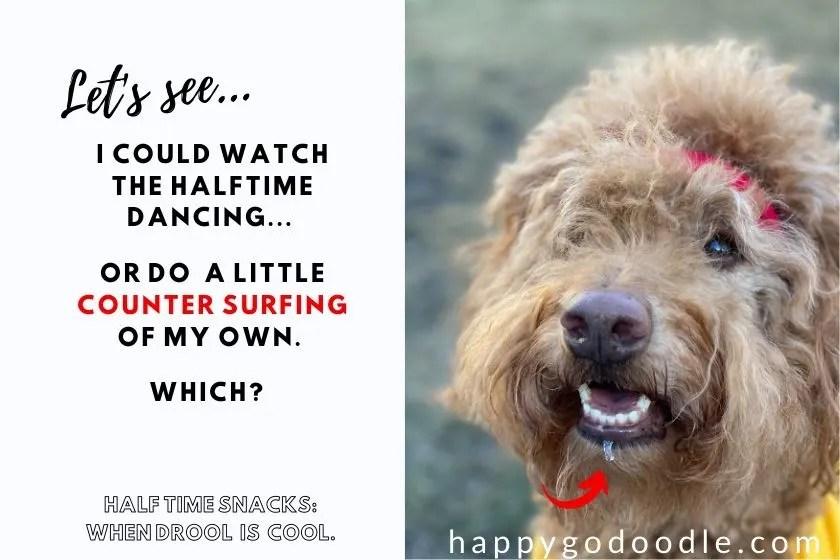 goldendoodle dog wearing mahomes bandana