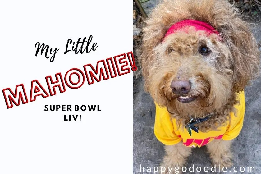 photo dog dressed as patrick mahomie and title my little mahomie