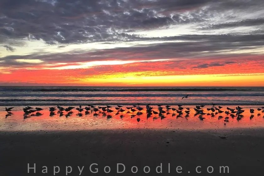 beautiful orange and red sunrise on beach with silhouettes of seagulls in the foreground, photo.