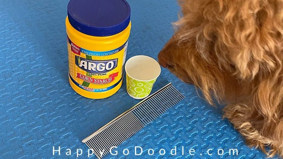 Goldendoodle dog investigating the table with cornstarch and comb used for removing mat, photo