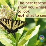 Teach to Learn – Teach to Heal