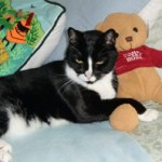 Reflecting on the Loss of a Pet