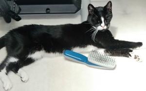 Pip the cat & his brush