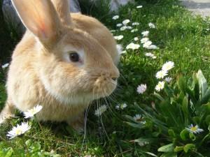 rabbit-344311_1280