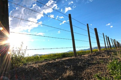 fence-422990_1280