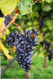 grapes-274132_1280