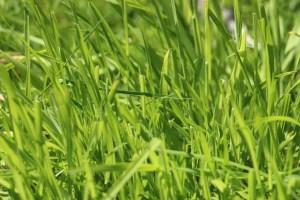 grass-632219_1280
