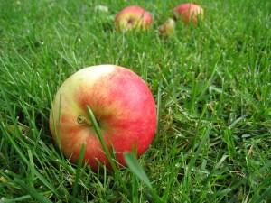 apples-85152_1280