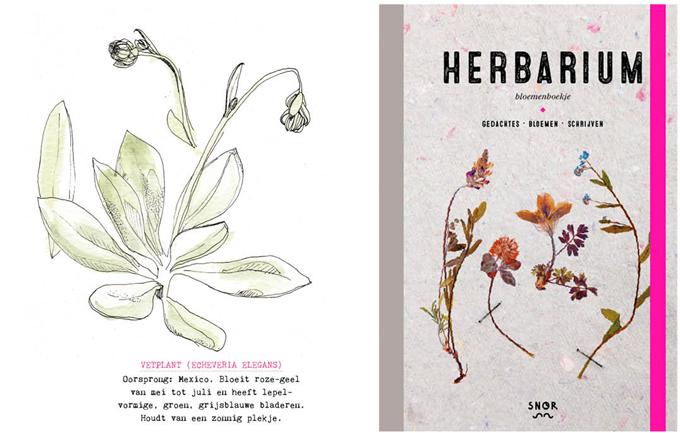 Snorfestival 2015 Herbarium