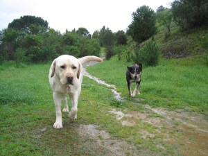 Dog Walking Newcastle Pet Sitter Newcastle Cat Sitter Gosforth Dog Walker Gosforth