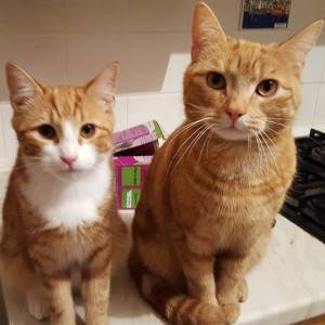 Cat Sitting Review Newcastle