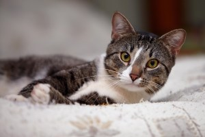 Cat sitter Newcastle upon Tyne